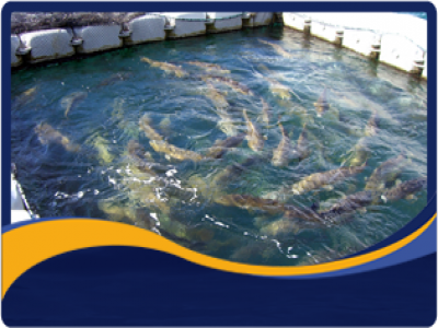 Aquaculture Development & Sustainability