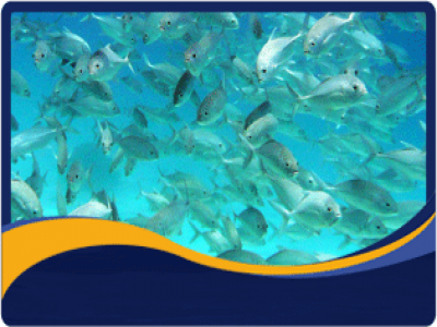 Marine Fisheries  Enhancement